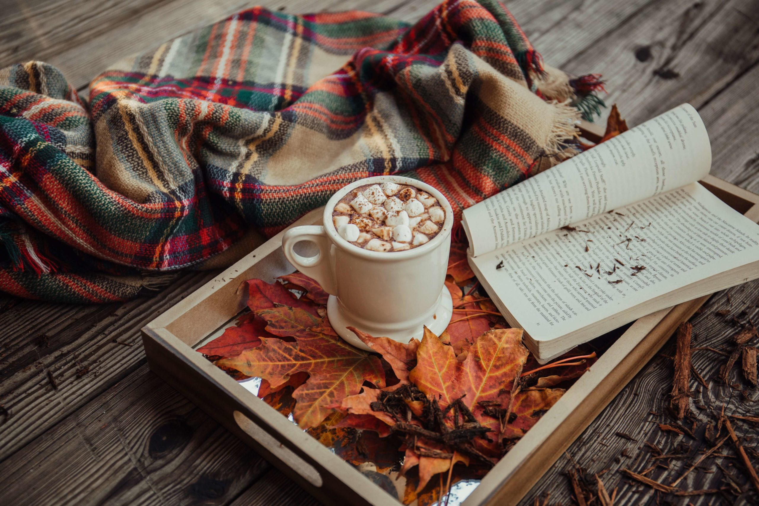 Hot chocolate with marshmallows comfort memories